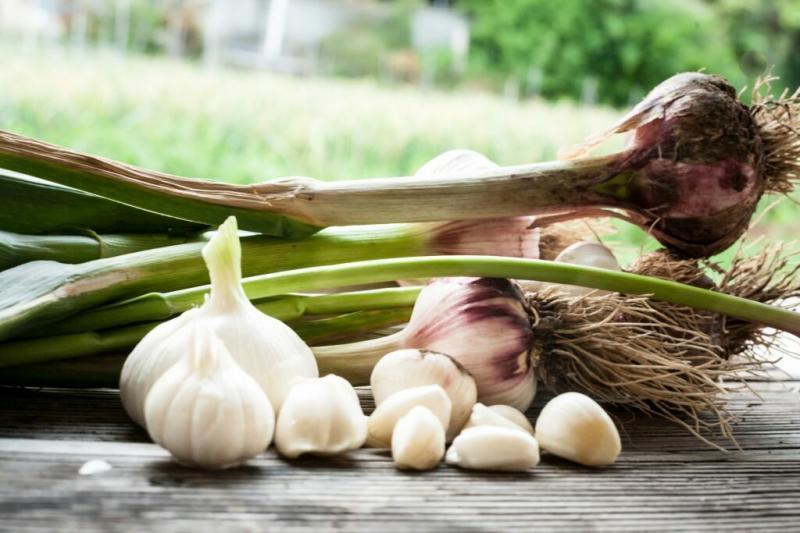 Выращивание чеснока в деревне как бизнес-идея. Один миллион чистой прибыли за сезон, реально ли.