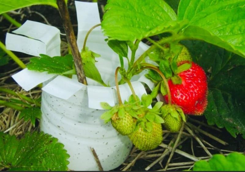 Как применить на даче ПЛАСТИКОВЫЕ БУТЫЛКИ- идеи, которые понравятся всем огородникам!