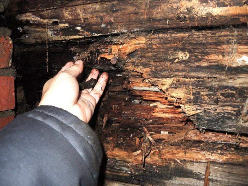 Как раз и навсегда защитить древесину от гниения и растрескивания? - Самодельная пропитка - экономично и долговечно