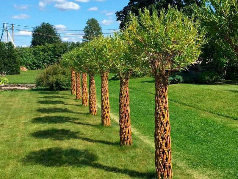 """Бизнес на своем участке. Плетение живых деревьев или """"северные пальмы"""" из ивы"""
